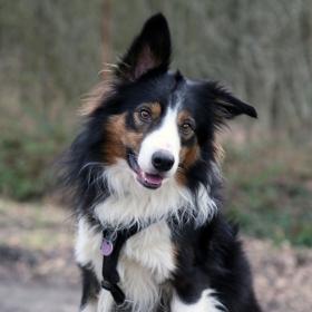 hond chayka (101)
