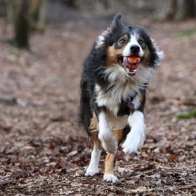 hond chayka (11)