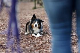 hond chayka (2)