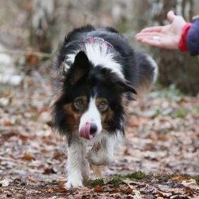 hond chayka (37)