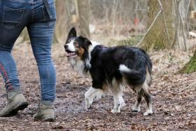 hond chayka (55)