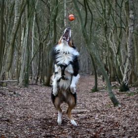 hond chayka (6)