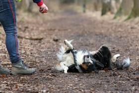 hond chayka (64)