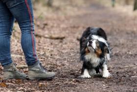 hond chayka (67)