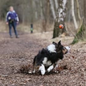 hond chayka (72)
