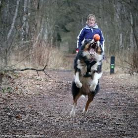 hond chayka (78)
