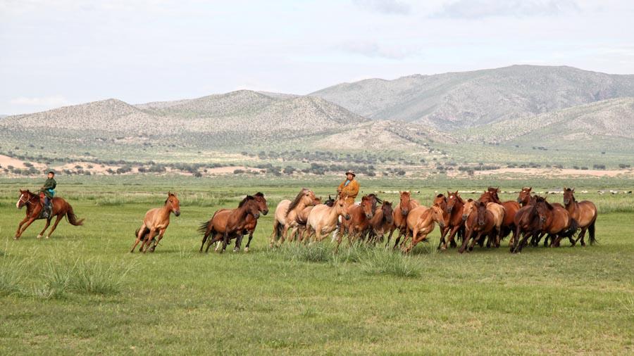 Mens & Dier - Mongolië 2018